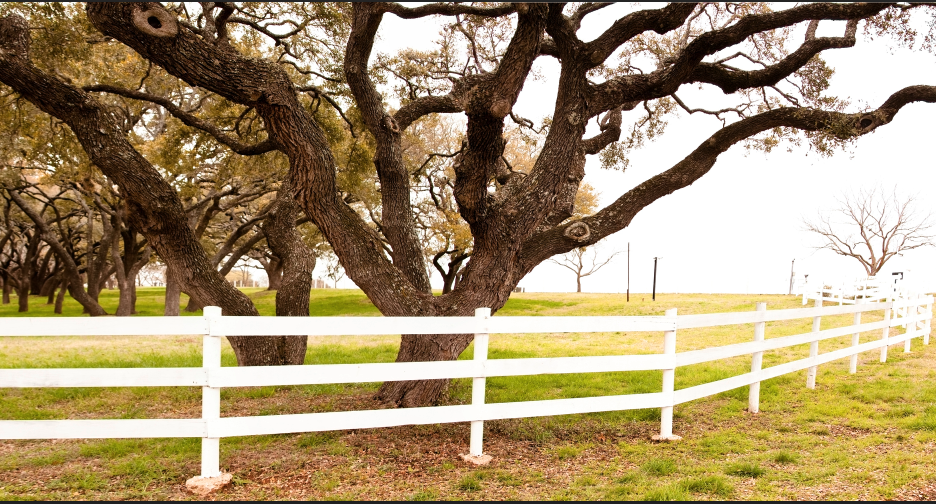 Caring for Live Oak Trees