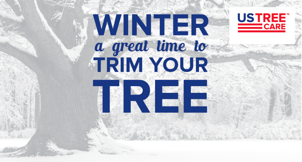 Re: Winter Tree Trimming