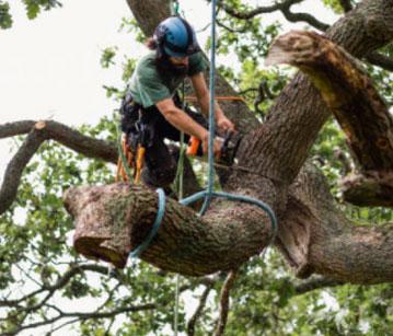 Tree Triming